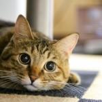 猫ひろしリオ五輪出場だニャー!
