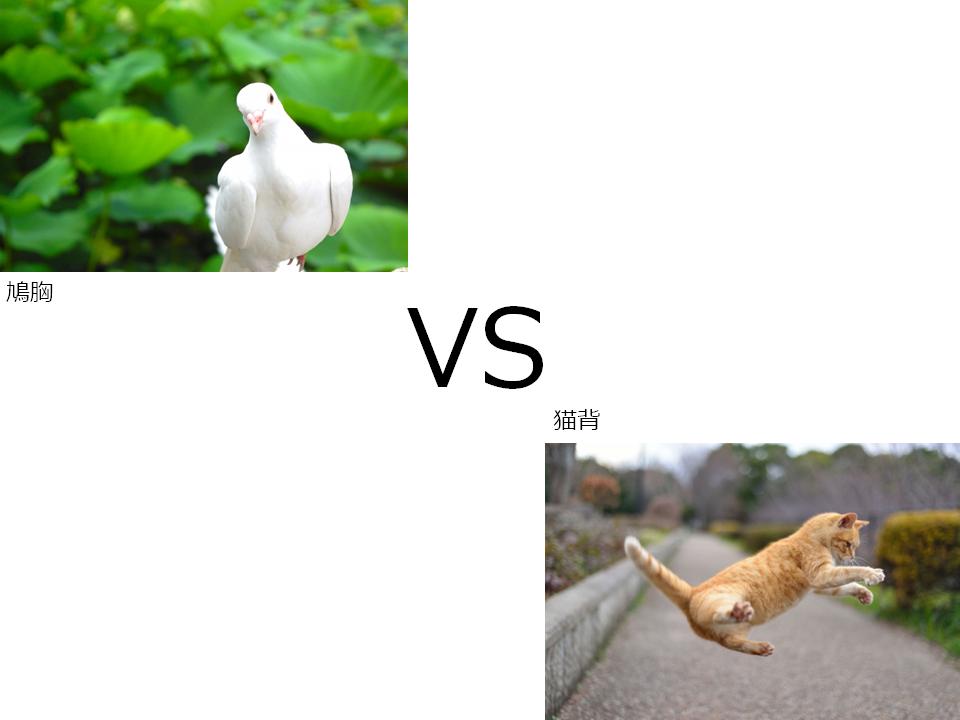 pigeon-cat